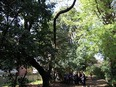 小石川植物園④