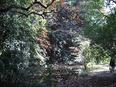 小石川植物園⑪