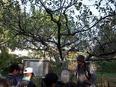 小石川植物園⑱